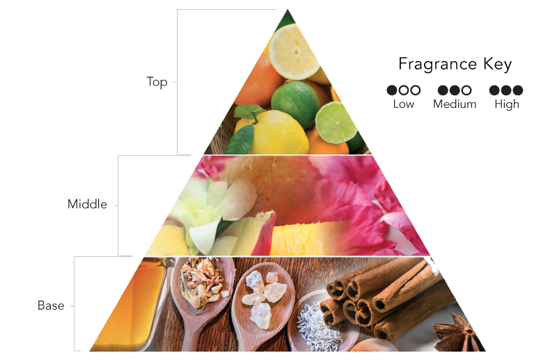 Fragrance Notes Diagram
